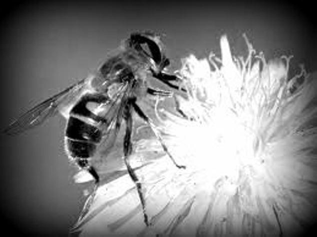 la abeja y el economista