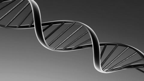 ¿Y si hablamos del ADN?