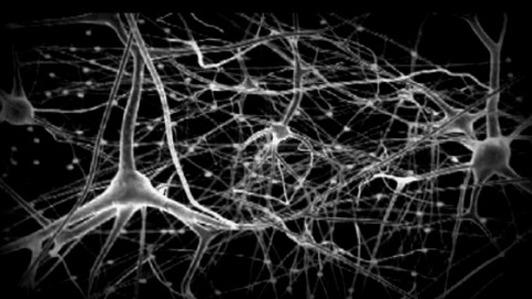 El icosistema Azucarera ¿un mapa neuronal?