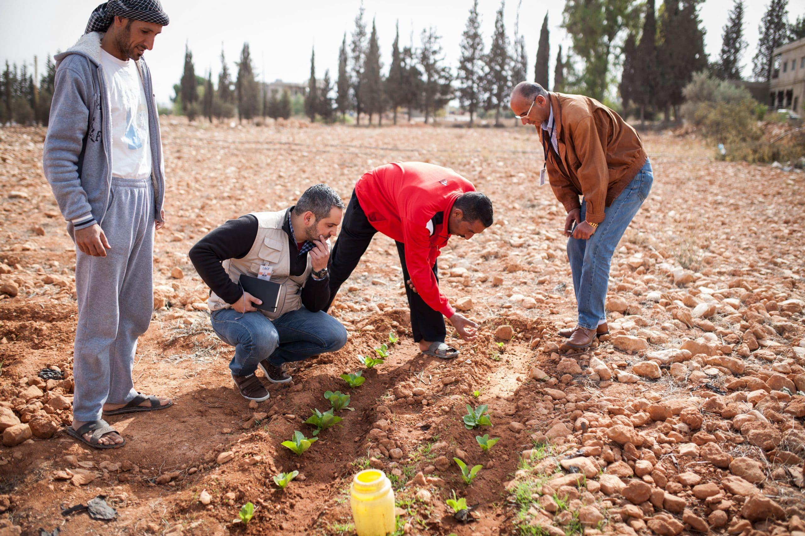 Refugiados en Líbano: cultivan verduras, recogen esperanza