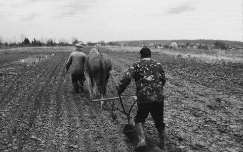Sobre primitivos, tecnología y animales