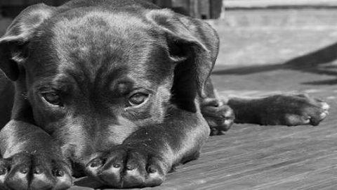 Dos perros, un periódico y una sonrisa